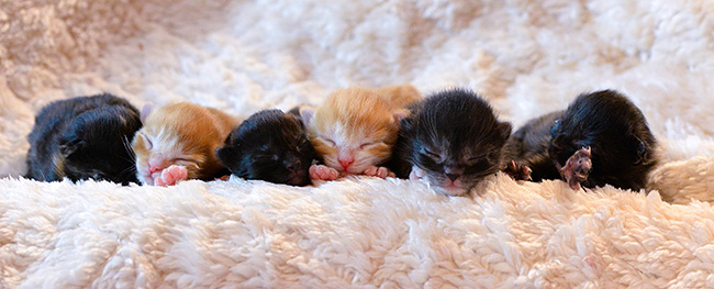 tiny-kittens-tinydancers