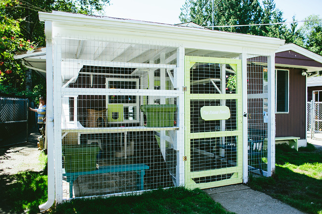 Outdoor Cat Rescue Enclosure