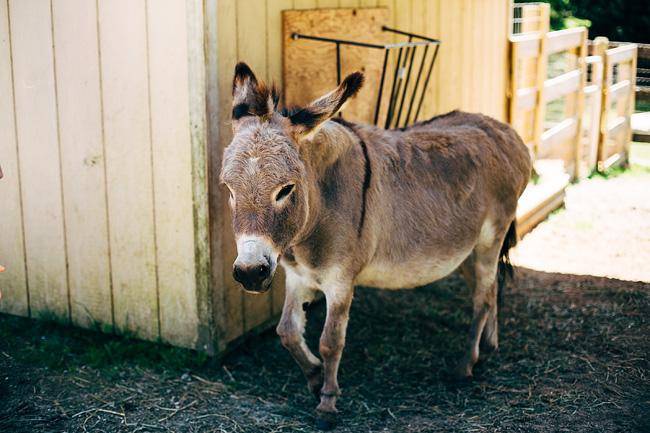 Donkey at Saints Rescue