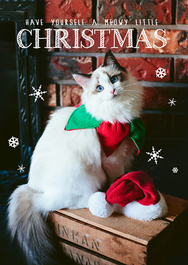 Kitten-Christmas-Card-Behind-the-Scenes001
