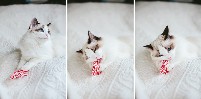 Kitten-Christmas-Card-Behind-the-Scenes005