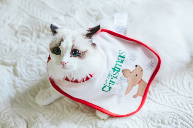 Kitten-Christmas-Card-Behind-the-Scenes006