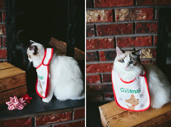Kitten-Christmas-Card-Behind-the-Scenes007