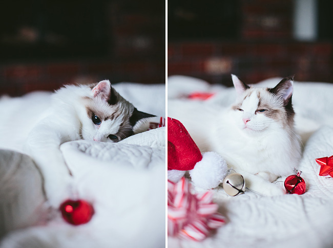 Kitten-Christmas-Card-Behind-the-Scenes011