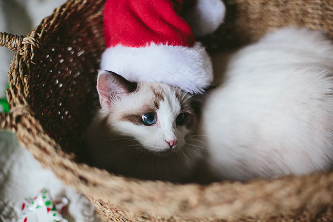 Kitten-Christmas-Card-Behind-the-Scenes012
