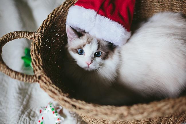 Kitten-Christmas-Card-Behind-the-Scenes013