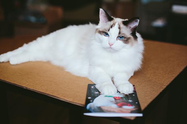 Kitten-Christmas-Card-Behind-the-Scenes017