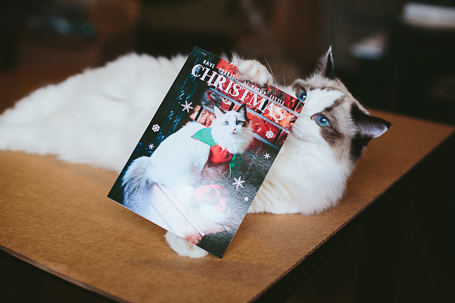 Kitten-Christmas-Card-Behind-the-Scenes018