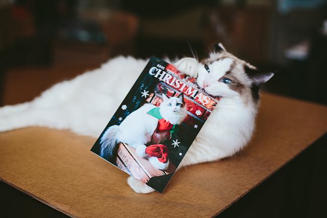 Kitten-Christmas-Card-Behind-the-Scenes019