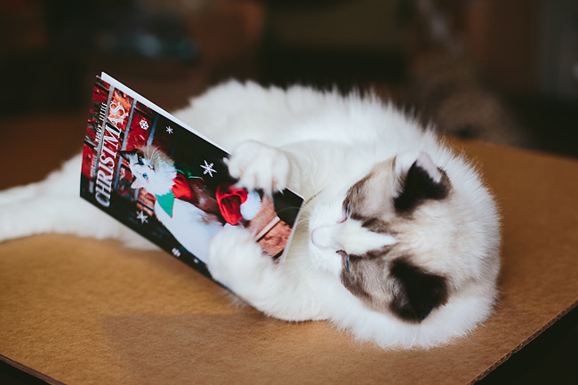 Kitten-Christmas-Card-Behind-the-Scenes020