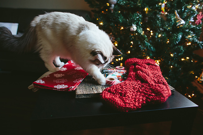 Kitten-Christmas-Card-Behind-the-Scenes021