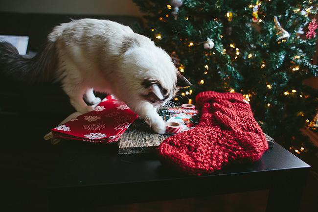 Kitten-Christmas-Card-Behind-the-Scenes021