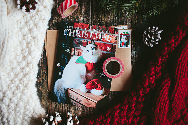 Kitten-Christmas-Card-Behind-the-Scenes022