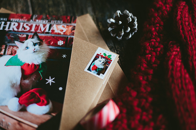 Kitten-Christmas-Card-Behind-the-Scenes025