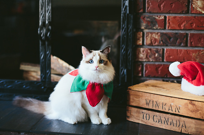 Kitten-Christmas-Card-Behind-the-Scenes033