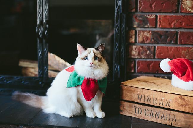 Kitten-Christmas-Card-Behind-the-Scenes033