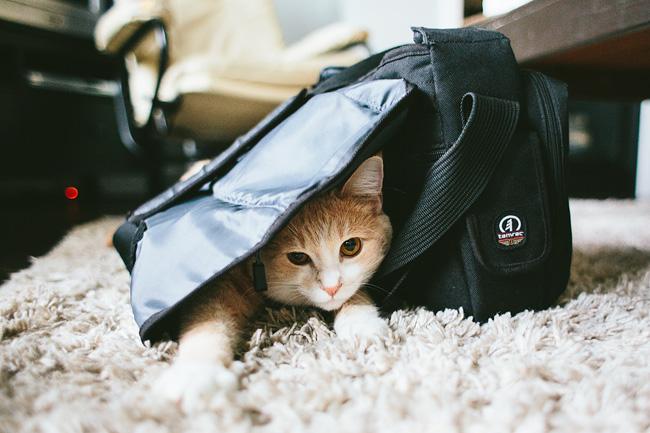 cute cat with camera bag