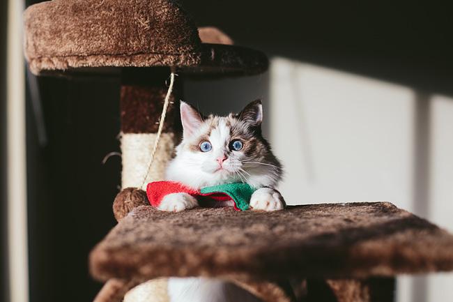 Kitten-Christmas-Card-Behind-the-Scenes002