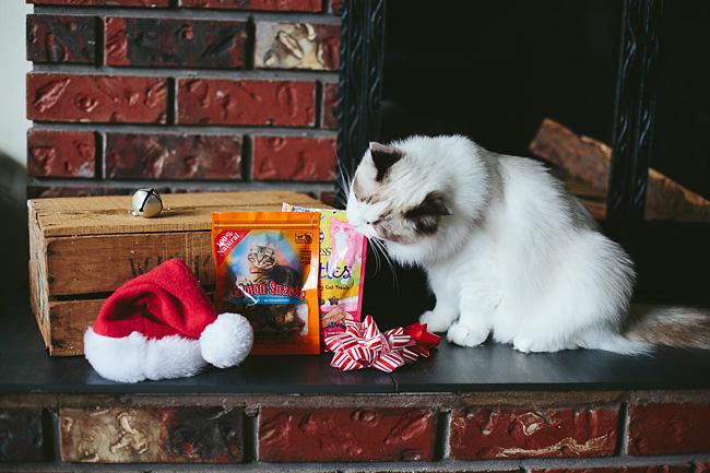 Kitten-Christmas-Card-Behind-the-Scenes009