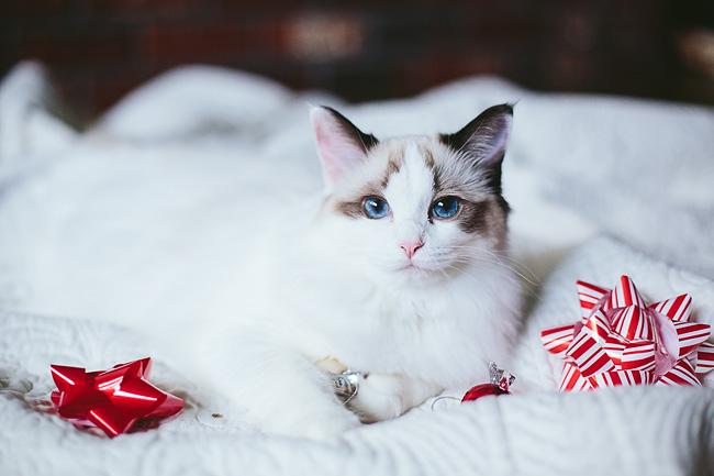 Kitten-Christmas-Card-Behind-the-Scenes010