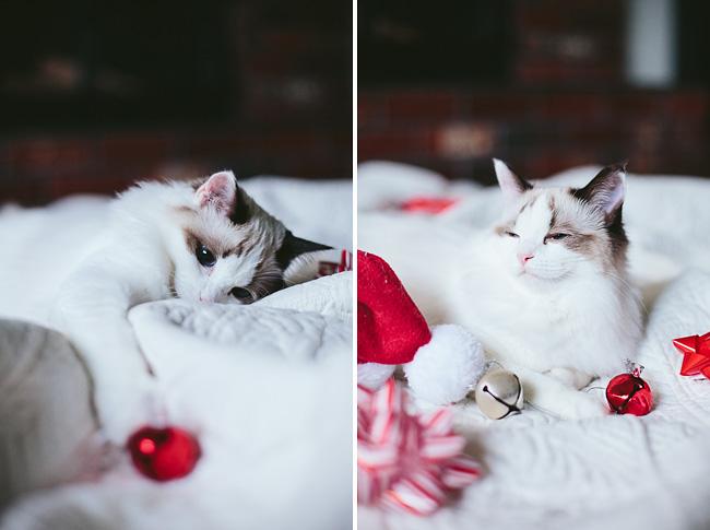 Kitten-Christmas-Card-Behind-the-Scenes011