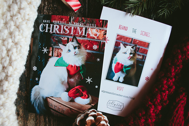 Kitten-Christmas-Card-Behind-the-Scenes024