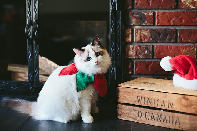 Kitten-Christmas-Card-Behind-the-Scenes034